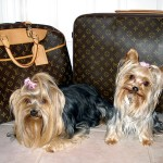 Dogs With Bags