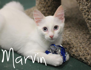 Marvin-10562