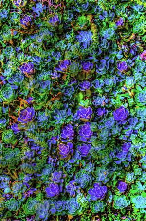succulent-wall-terra-bella