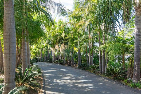 Vista Acreage and nursery real estate